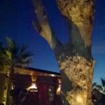 Sunset trunk